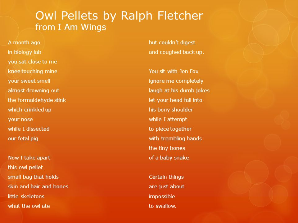 Owl Pellets by Ralph Fletcher from I Am Wings
