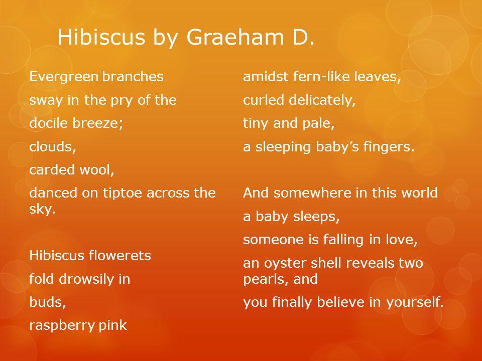 Hibiscus by Graeham D.