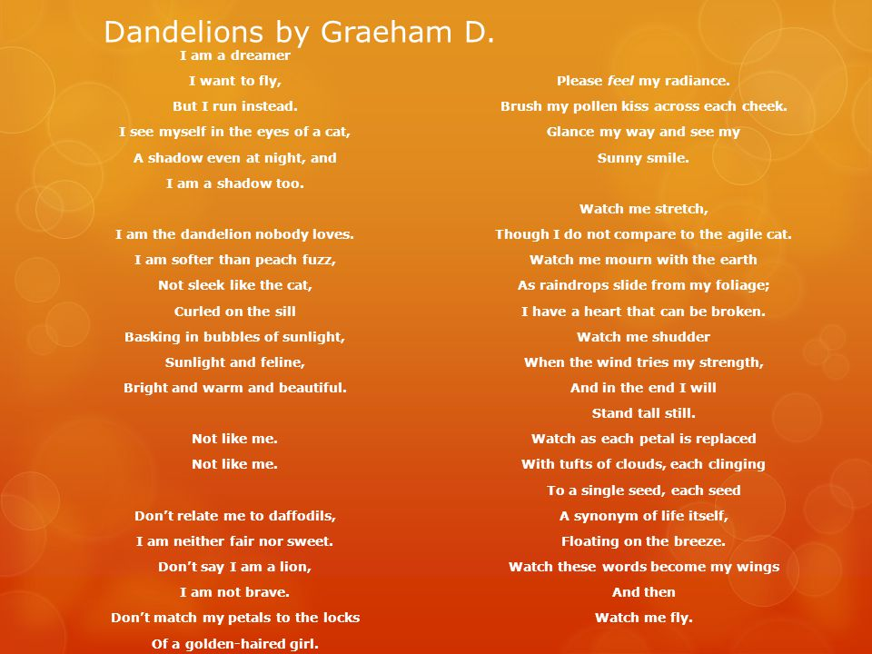 Dandelions by Graeham D.