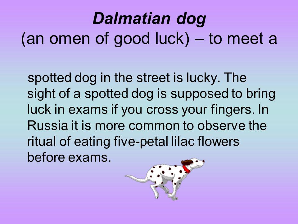 Dalmatian dog (an omen of good luck) – to meet a