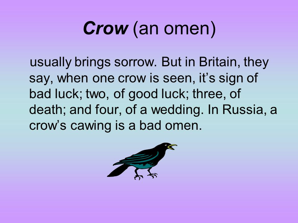 Crow (an omen)