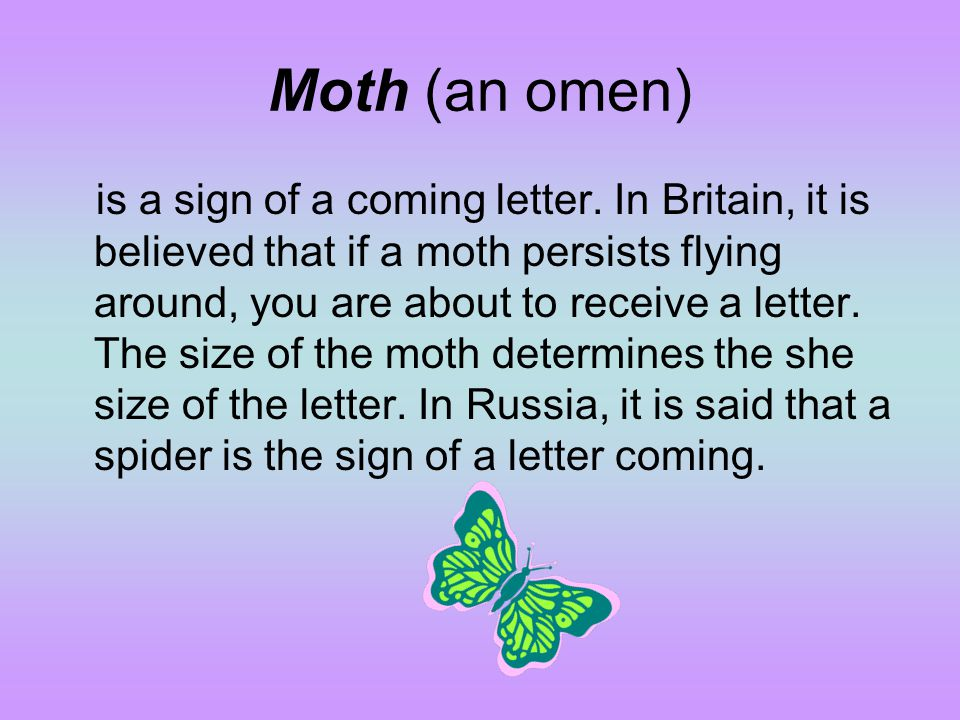 Moth (an omen)
