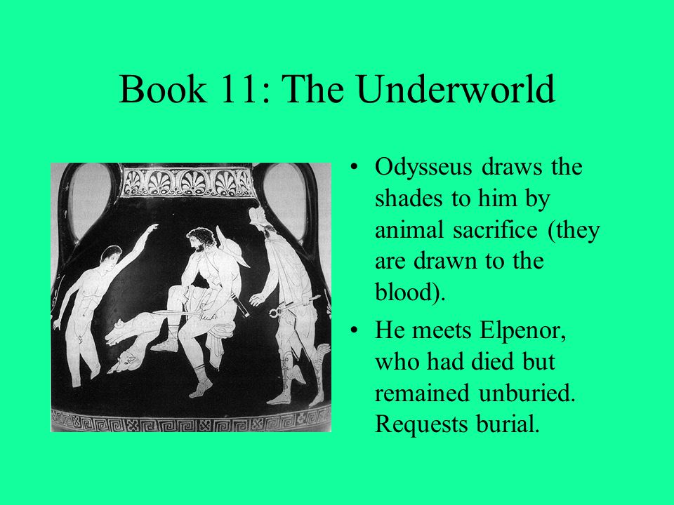 Book 11: The Underworld Odysseus draws the shades to him by animal sacrifice (they are drawn to the blood).