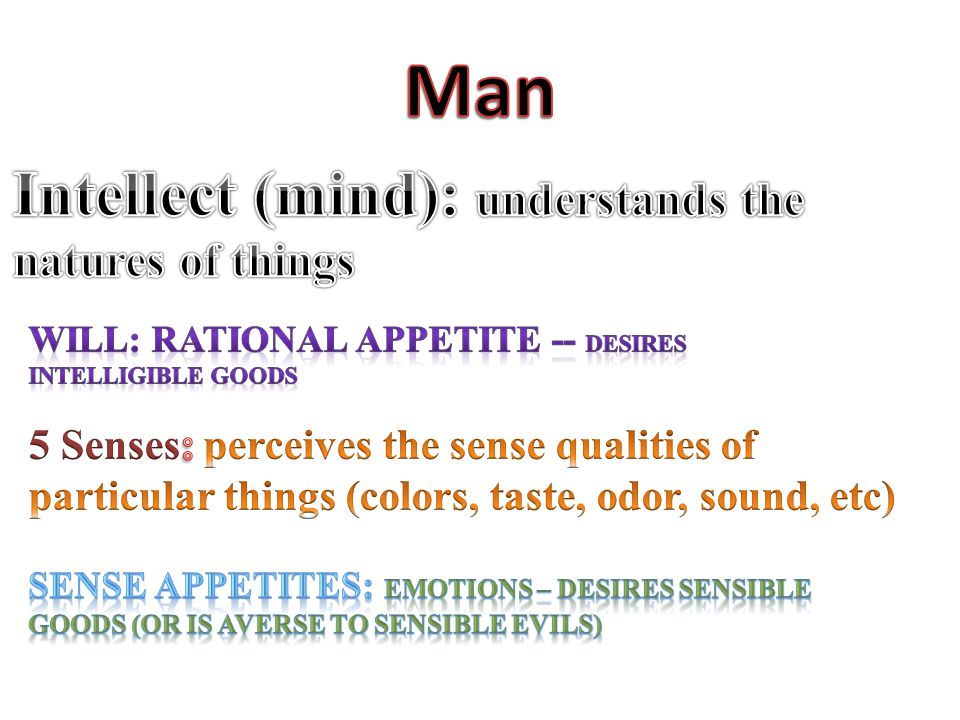 Man Intellect (mind): understands the natures of things