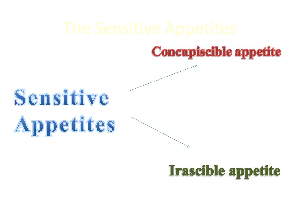The Sensitive Appetites