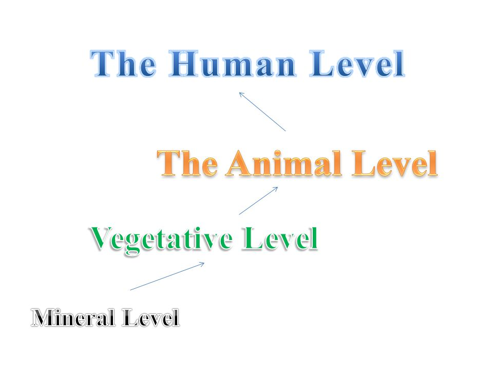 The Human Level The Animal Level