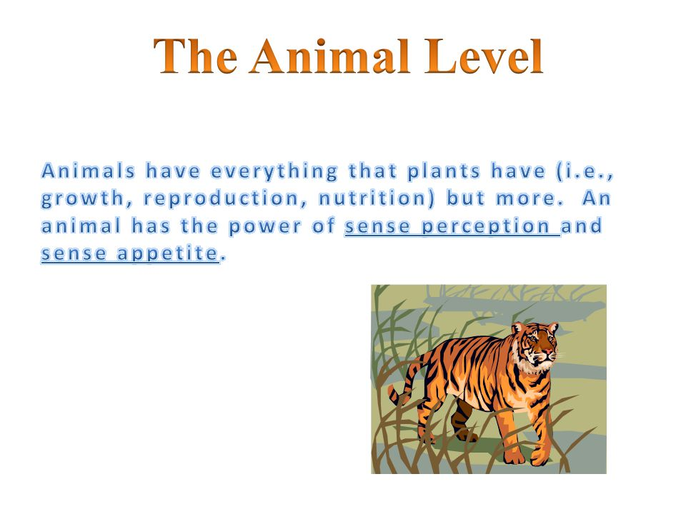 The Animal Level