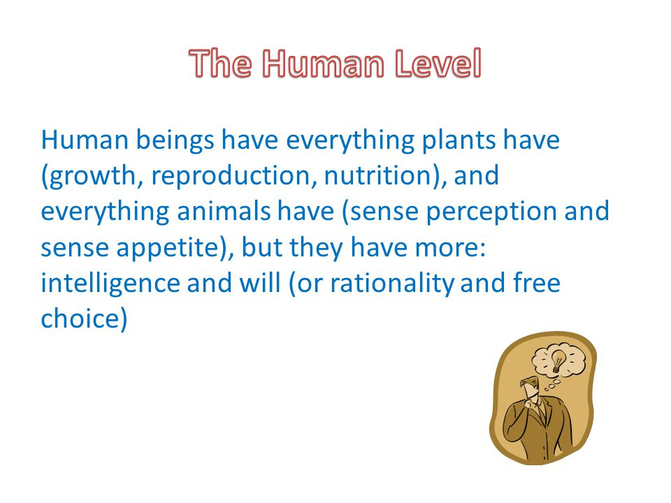 The Human Level