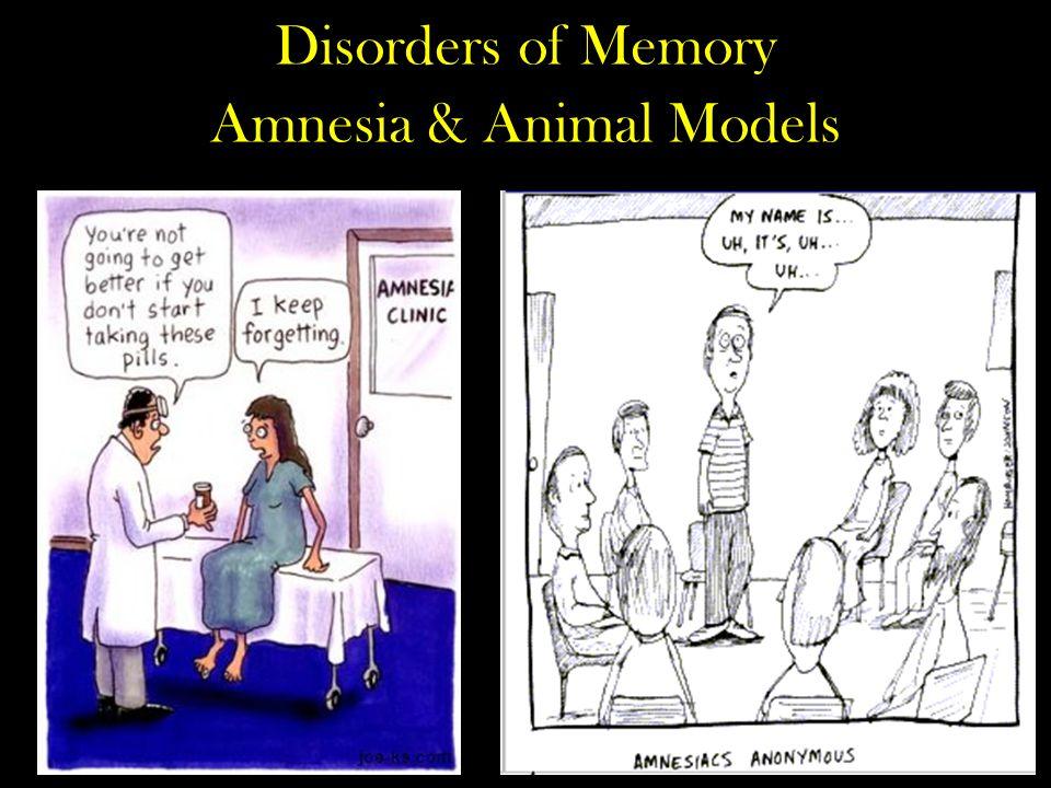 Disorders of Memory Amnesia & Animal Models