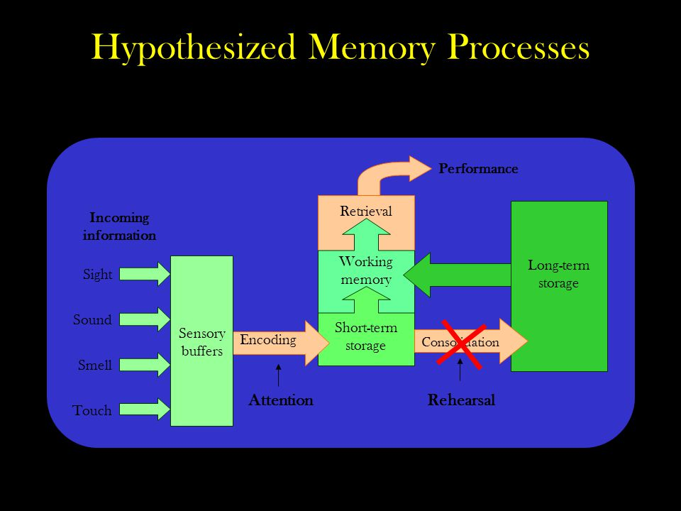 Hypothesized Memory Processes