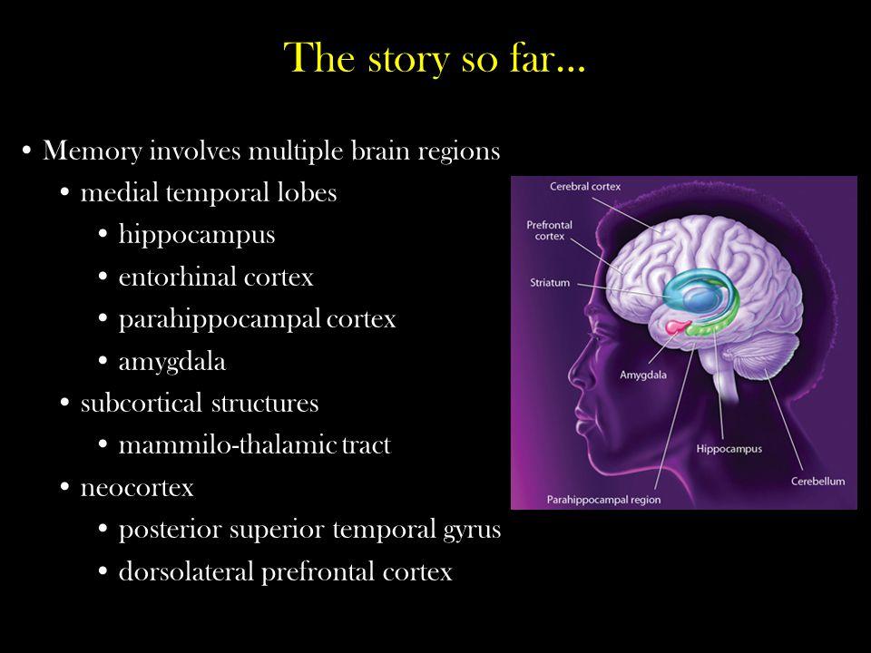 The story so far… Memory involves multiple brain regions