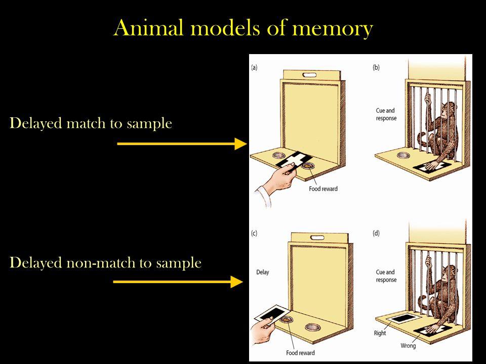 Animal models of memory