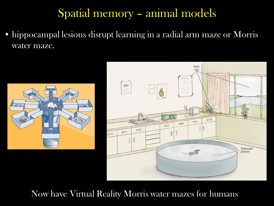 Spatial memory – animal models
