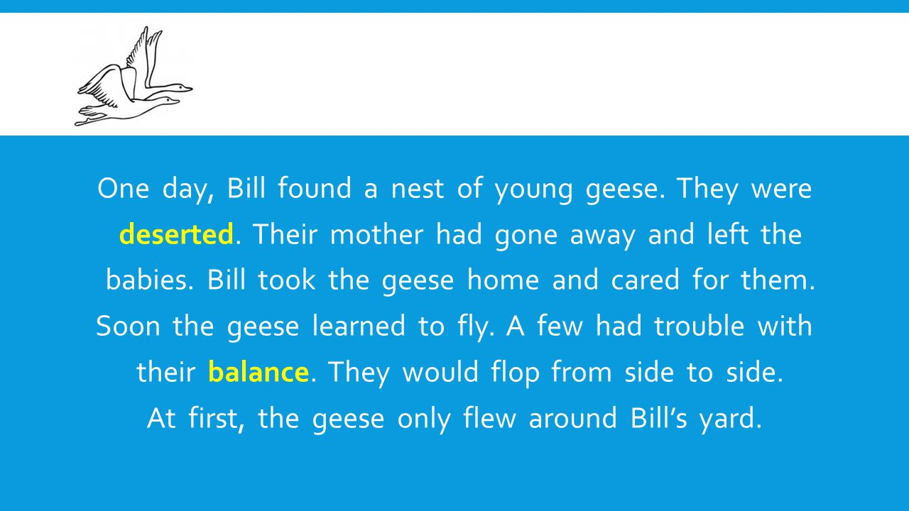 One day, Bill found a nest of young geese. They were deserted