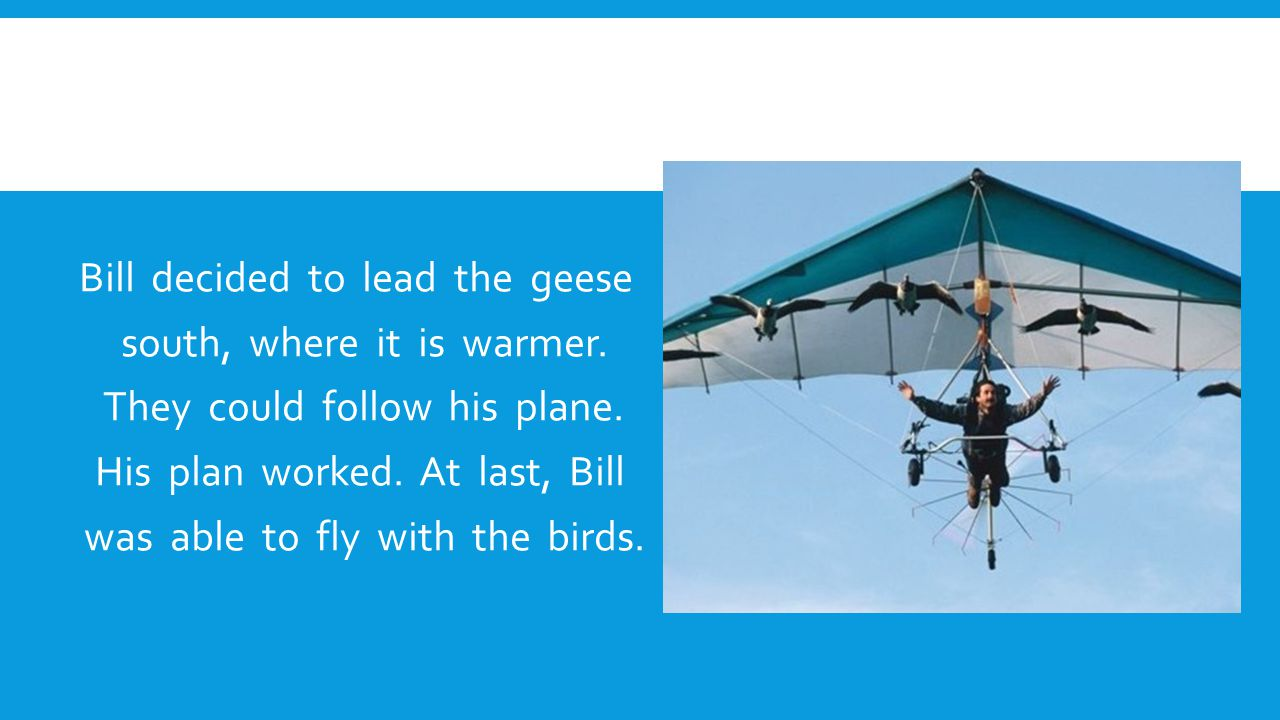 Bill decided to lead the geese south, where it is warmer