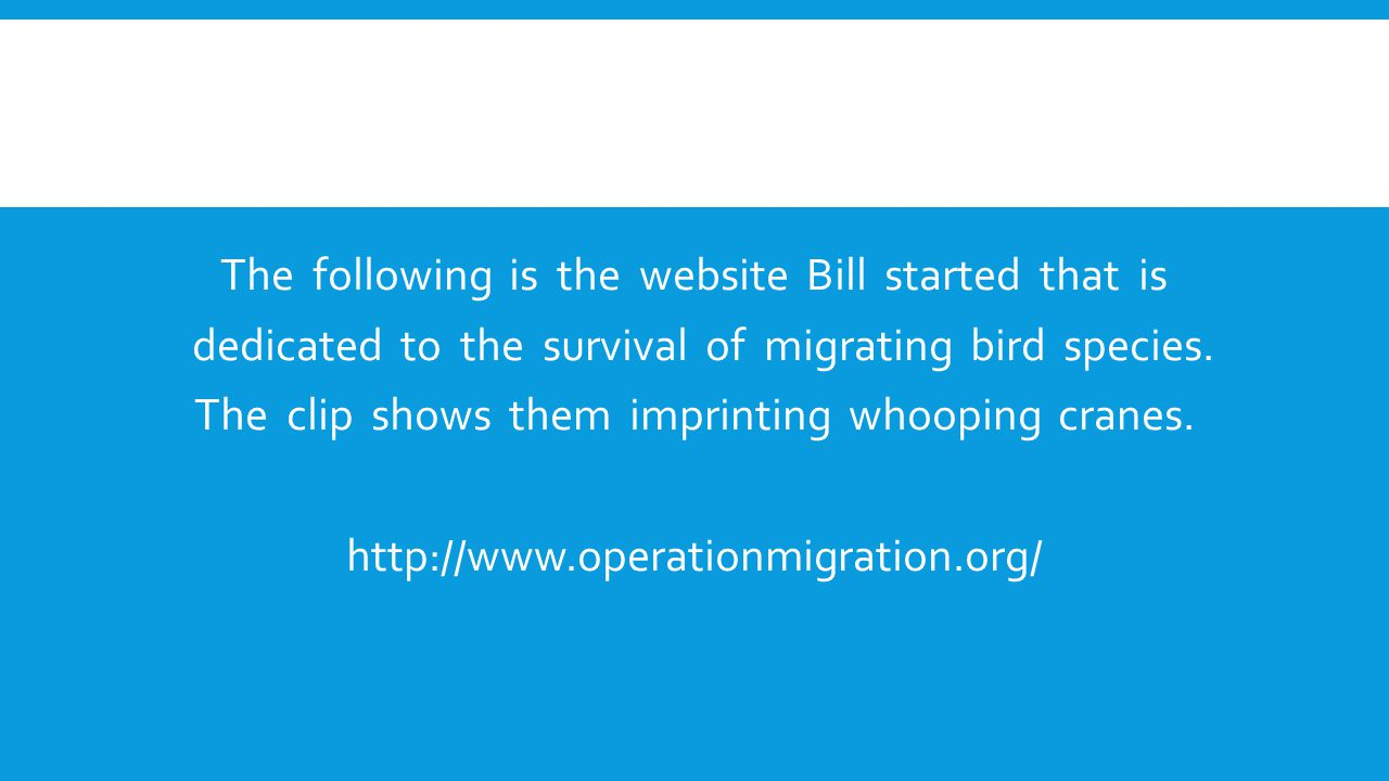 The following is the website Bill started that is dedicated to the survival of migrating bird species.
