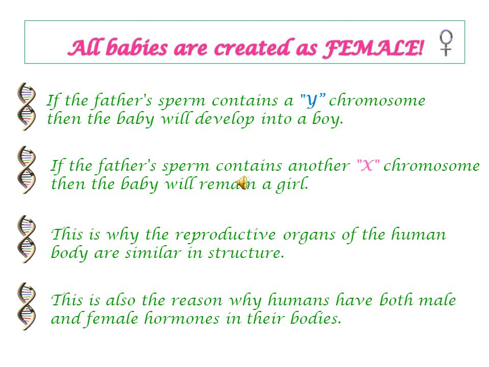All babies are created as FEMALE!