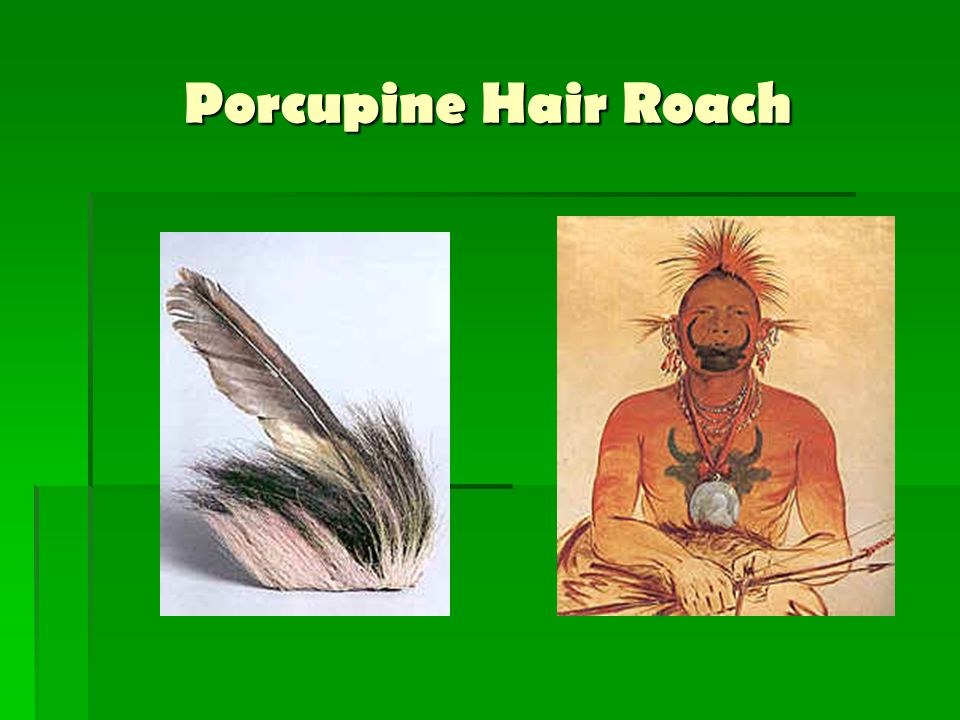 Porcupine Hair Roach