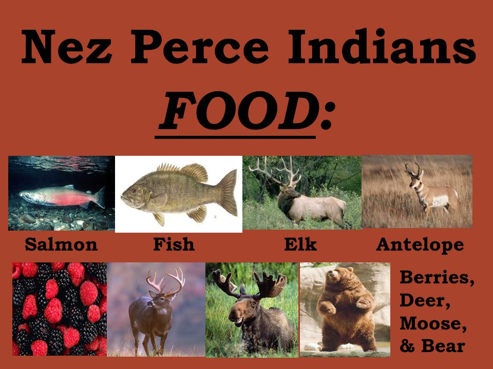 FOOD: Nez Perce Indians Salmon Fish Elk Antelope