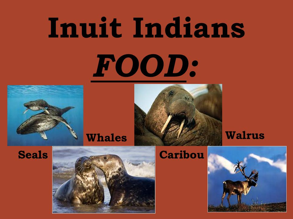 Inuit Indians FOOD: Walrus Whales Seals Caribou