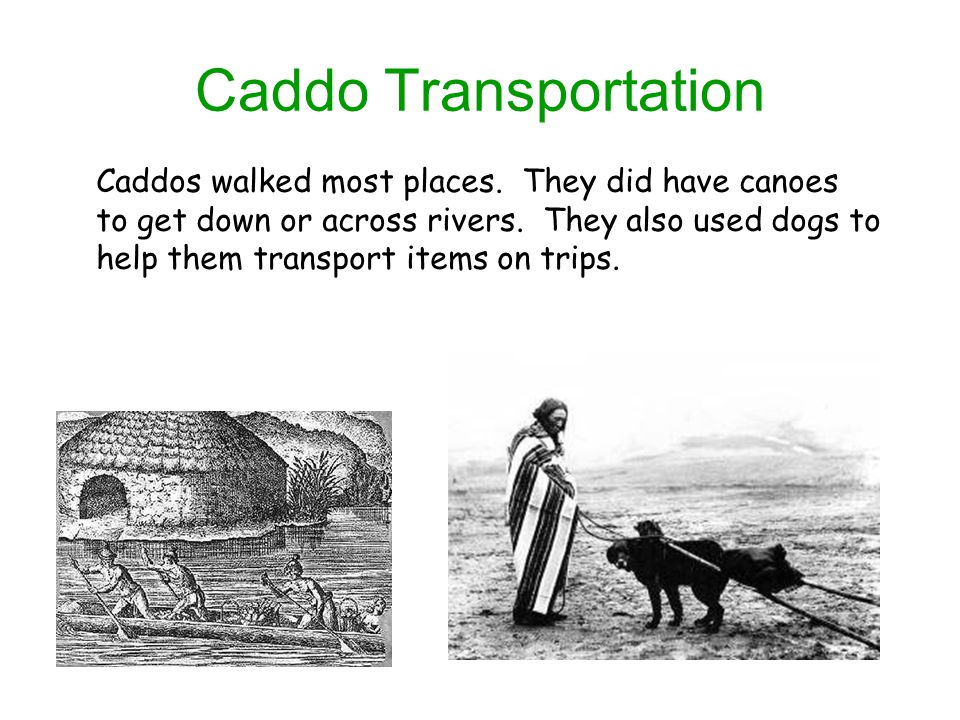 Caddo Transportation Caddos walked most places. They did have canoes