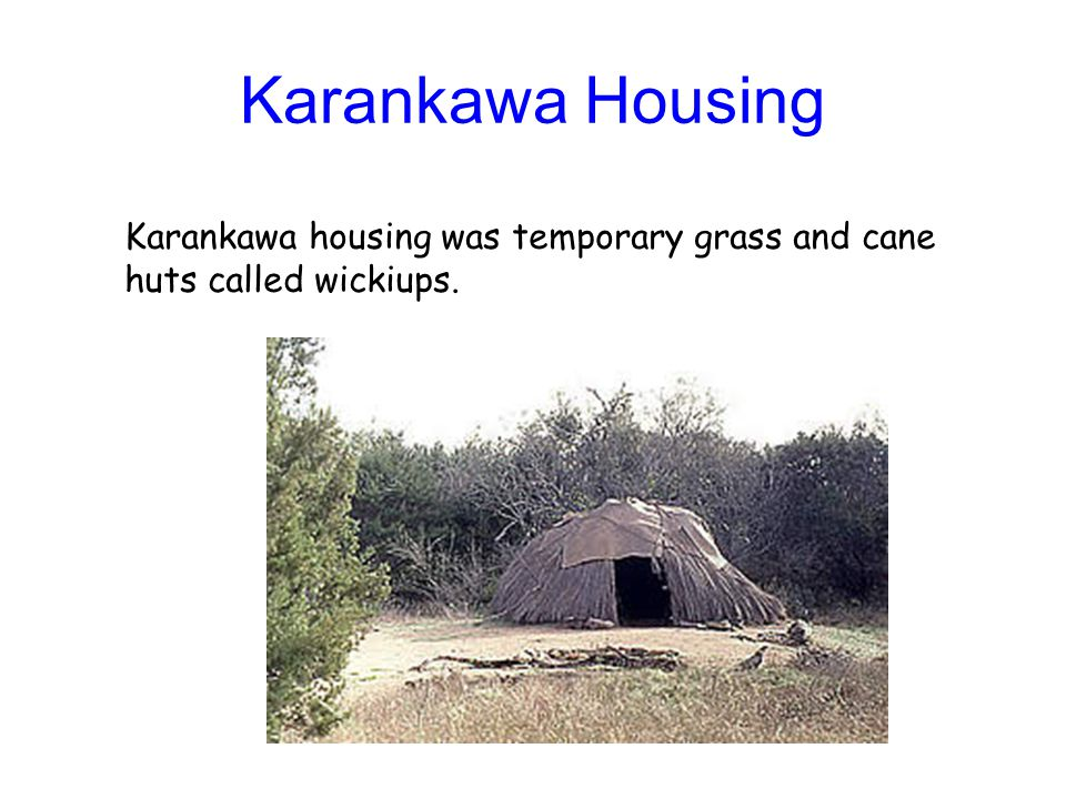 Karankawa Housing Karankawa housing was temporary grass and cane