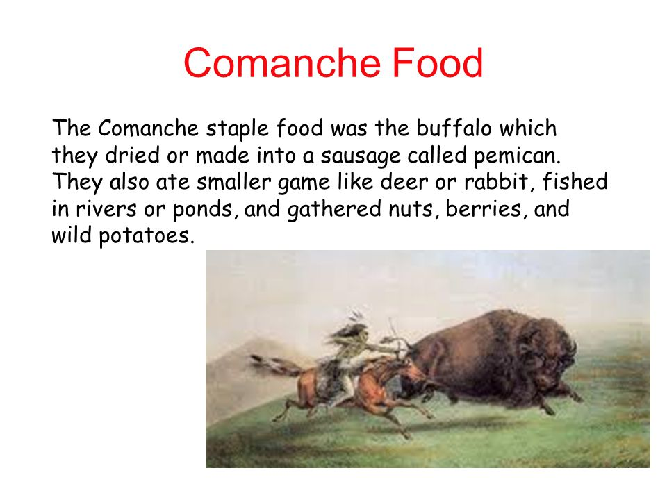Comanche Food The Comanche staple food was the buffalo which