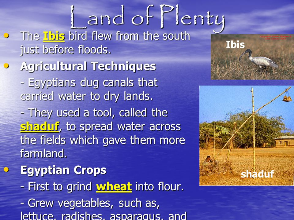 Land of Plenty The Ibis bird flew from the south just before floods.