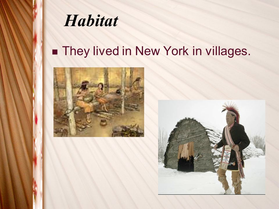 Habitat They lived in New York in villages.