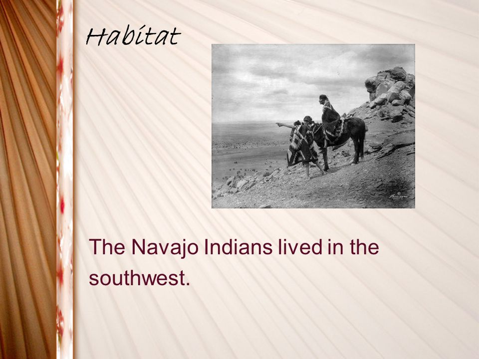 Habitat The Navajo Indians lived in the southwest.