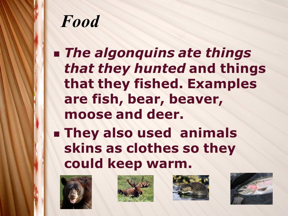 Food The algonquins ate things that they hunted and things that they fished. Examples are fish, bear, beaver, moose and deer.