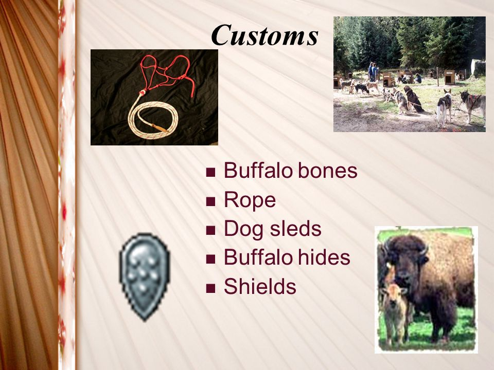 Customs Buffalo bones Rope Dog sleds Buffalo hides Shields