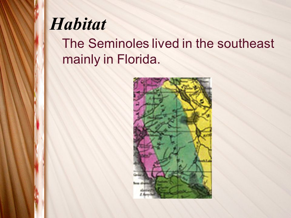 Habitat The Seminoles lived in the southeast mainly in Florida.