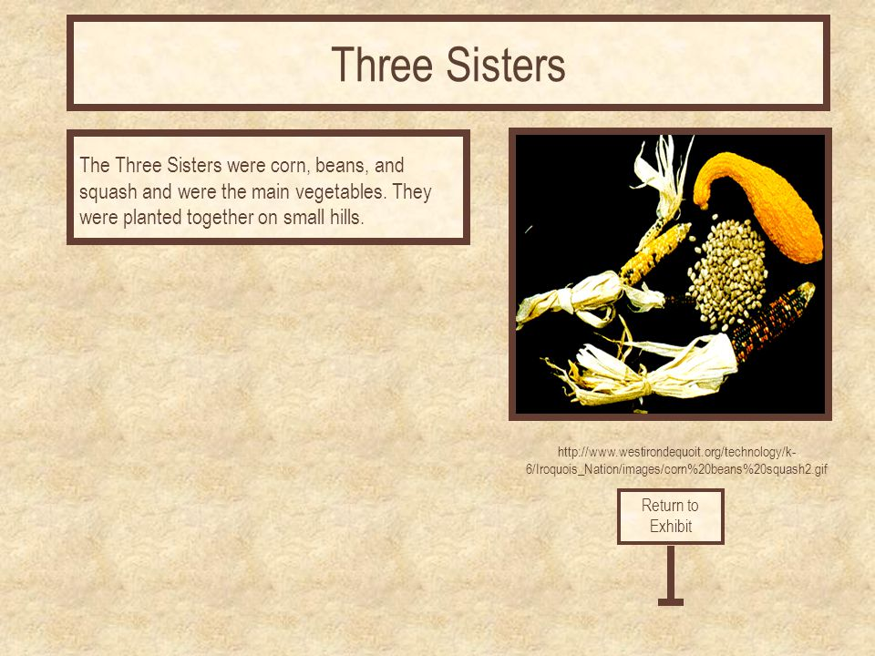 Three Sisters The Three Sisters were corn, beans, and squash and were the main vegetables. They were planted together on small hills.