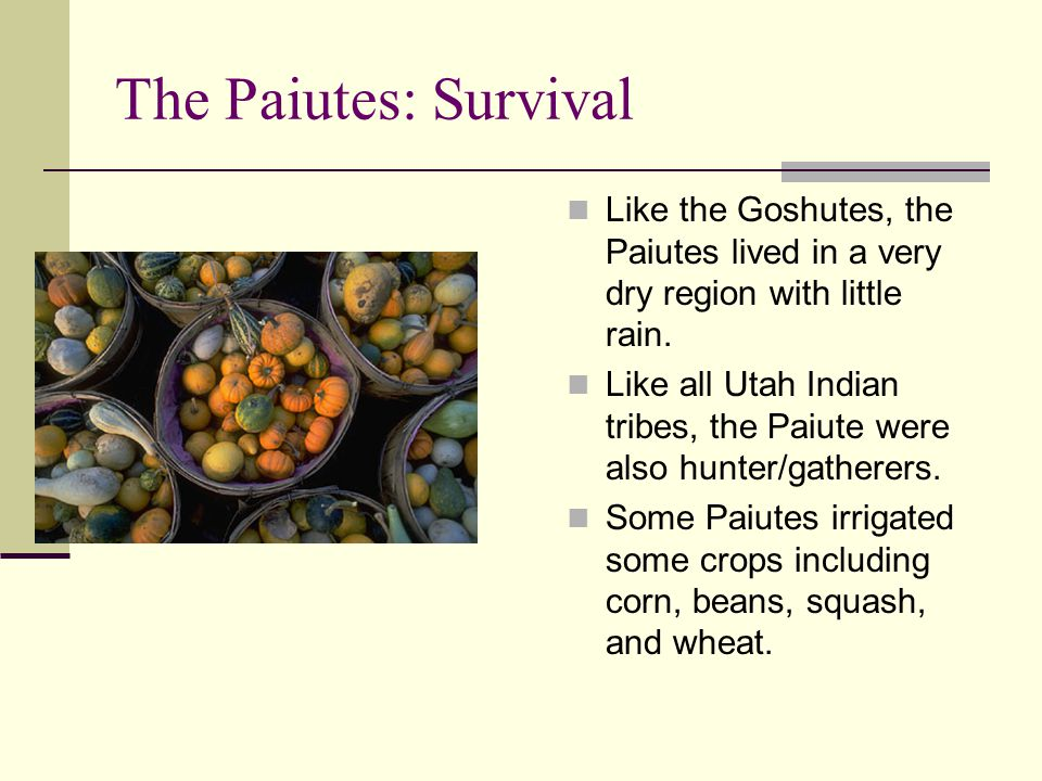 The Paiutes: Survival Like the Goshutes, the Paiutes lived in a very dry region with little rain.