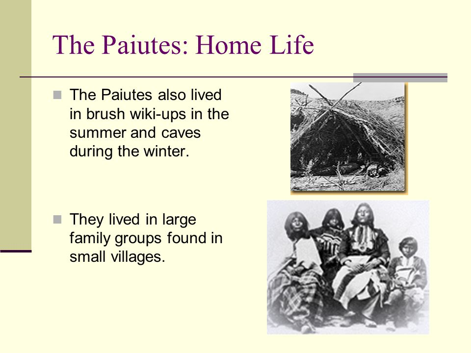 The Paiutes: Home Life The Paiutes also lived in brush wiki-ups in the summer and caves during the winter.