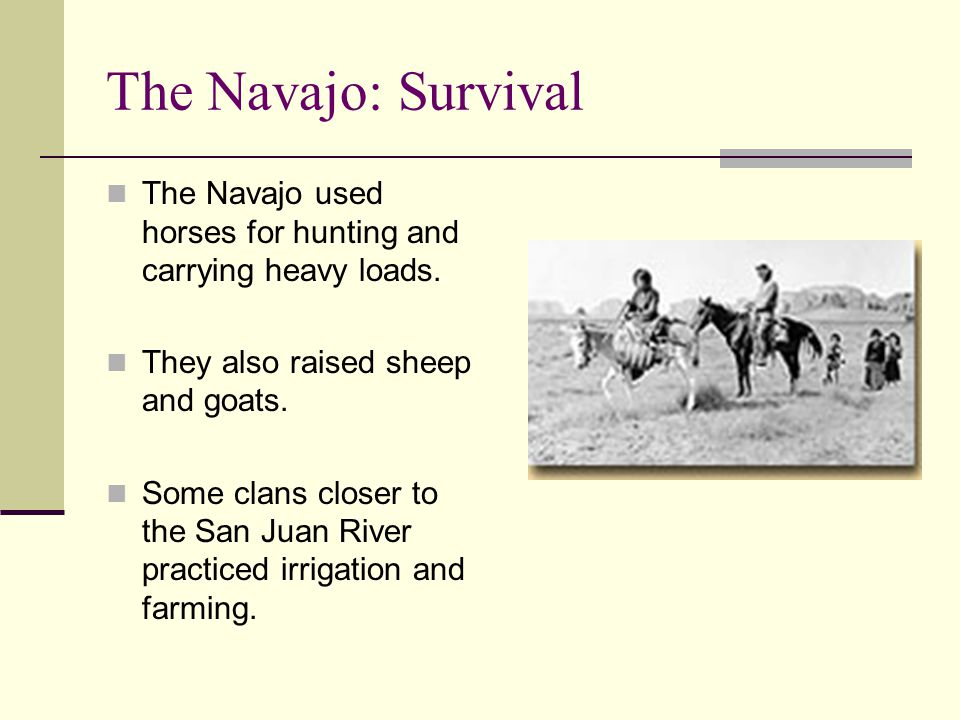 The Navajo: Survival The Navajo used horses for hunting and carrying heavy loads. They also raised sheep and goats.