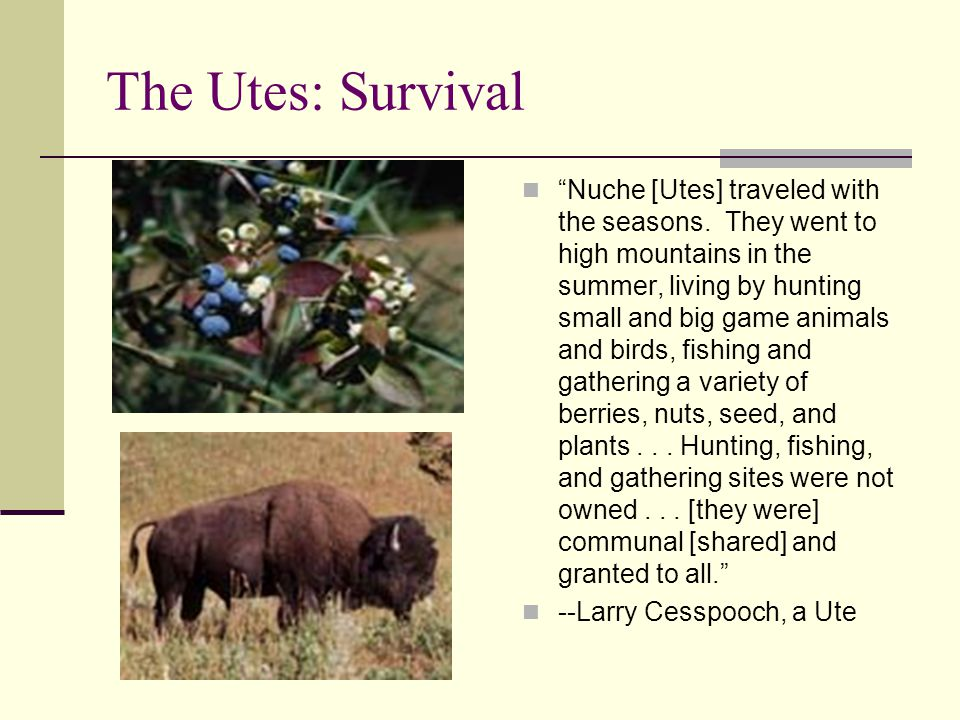 The Utes: Survival