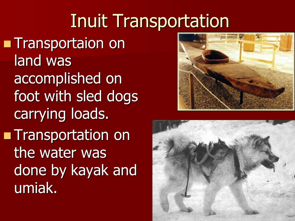 Inuit Transportation Transportaion on land was accomplished on foot with sled dogs carrying loads.