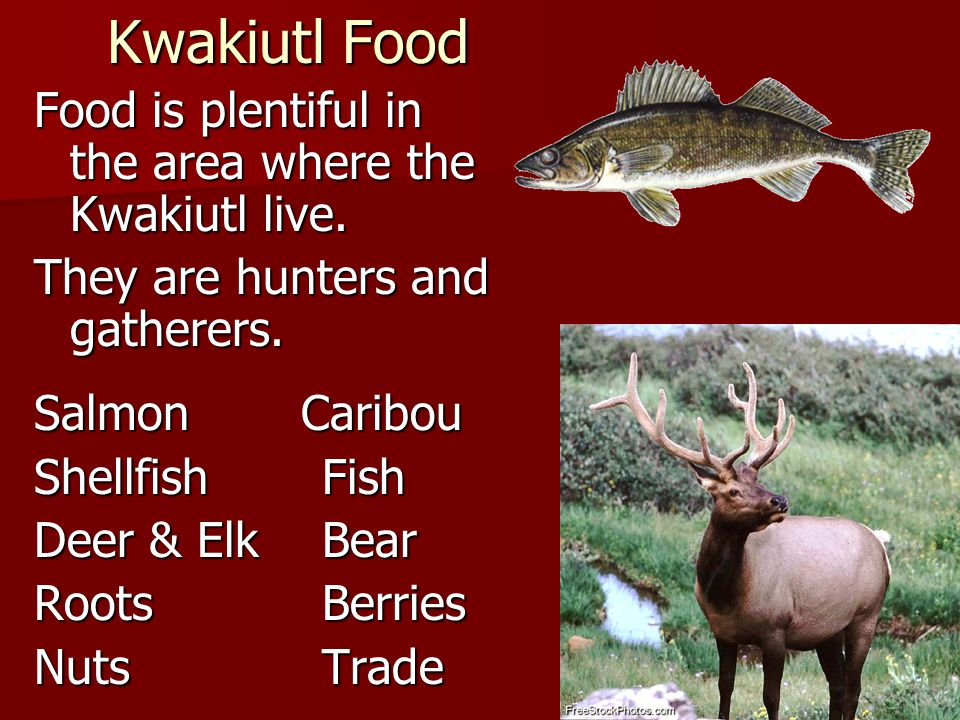 Kwakiutl Food Food is plentiful in the area where the Kwakiutl live.
