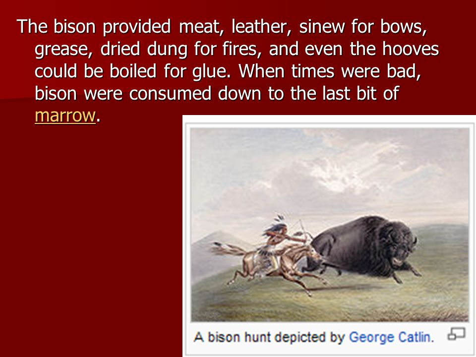 The bison provided meat, leather, sinew for bows, grease, dried dung for fires, and even the hooves could be boiled for glue.