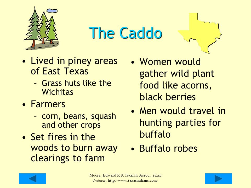 The Caddo Lived in piney areas of East Texas Farmers