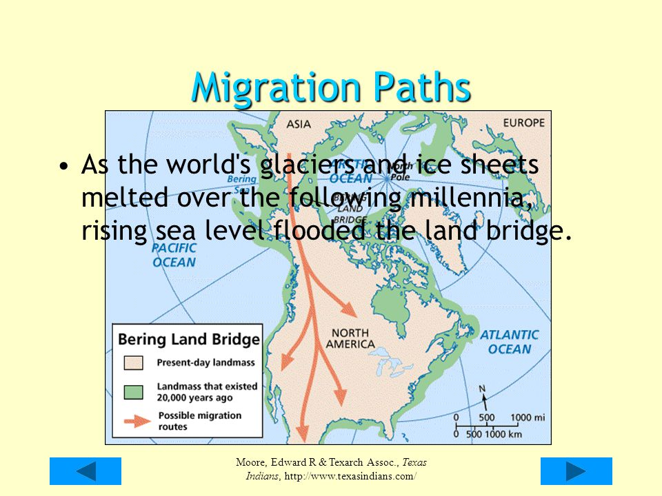 Migration Paths As the world s glaciers and ice sheets melted over the following millennia, rising sea level flooded the land bridge.