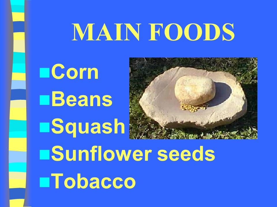 MAIN FOODS Corn Beans Squash Sunflower seeds Tobacco