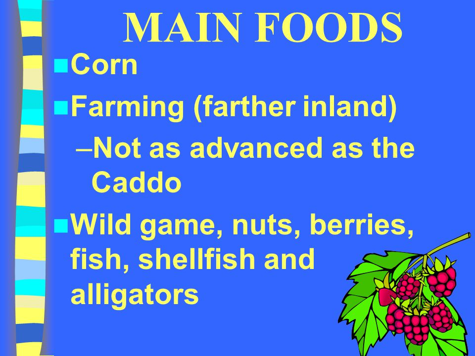 MAIN FOODS Corn Farming (farther inland) Not as advanced as the Caddo