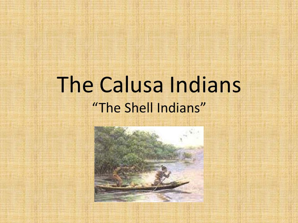 The Calusa Indians The Shell Indians