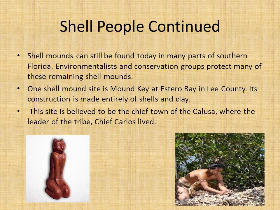 Shell People Continued