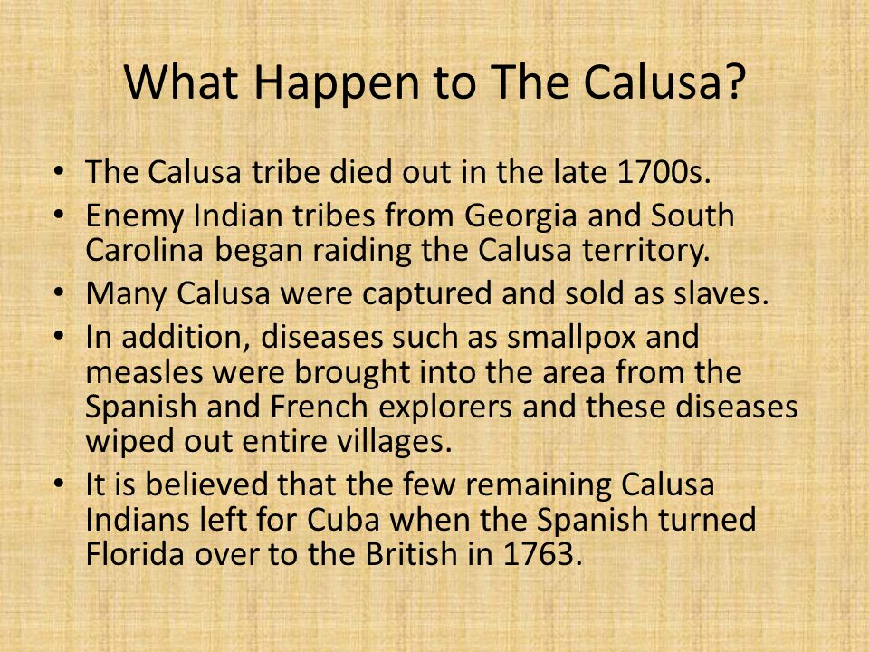 What Happen to The Calusa