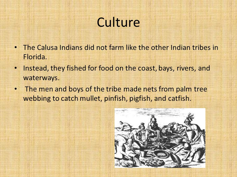Culture The Calusa Indians did not farm like the other Indian tribes in Florida.
