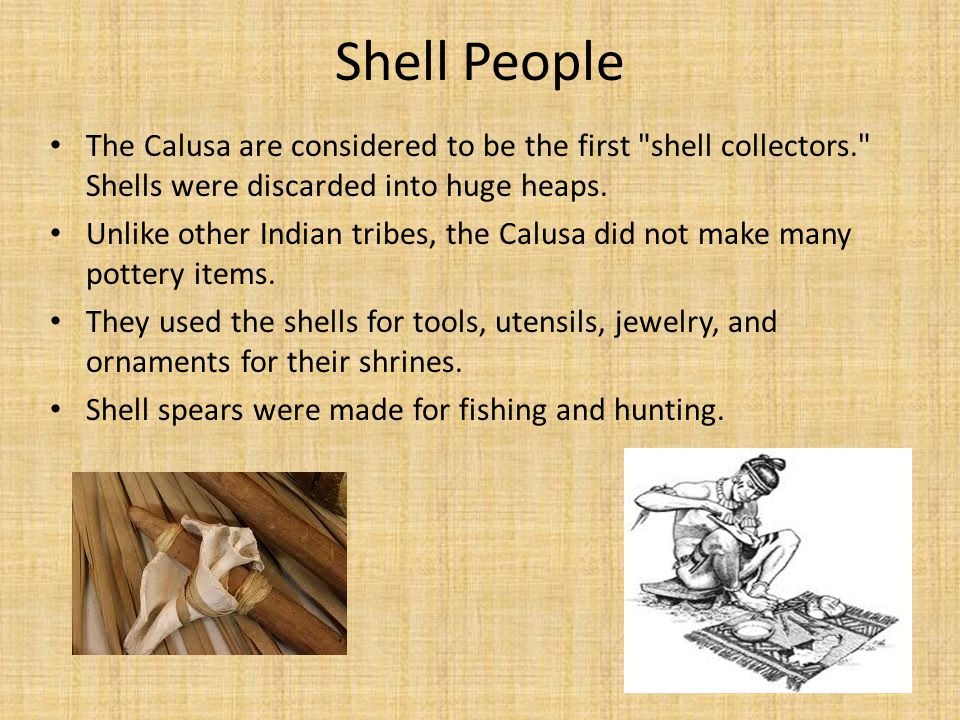 Shell People The Calusa are considered to be the first shell collectors. Shells were discarded into huge heaps.